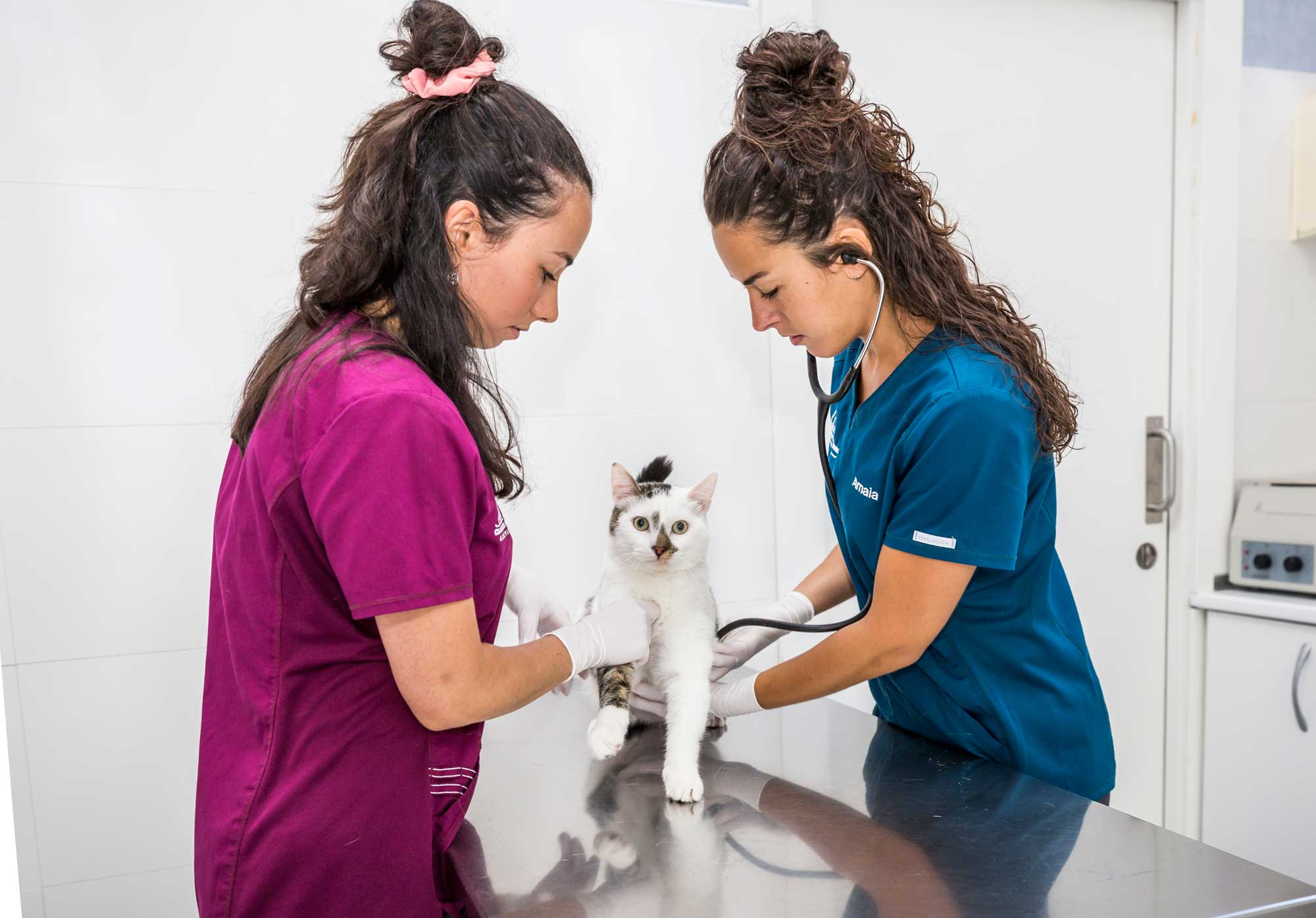 Clínica Veterinaria Ariznabarra
